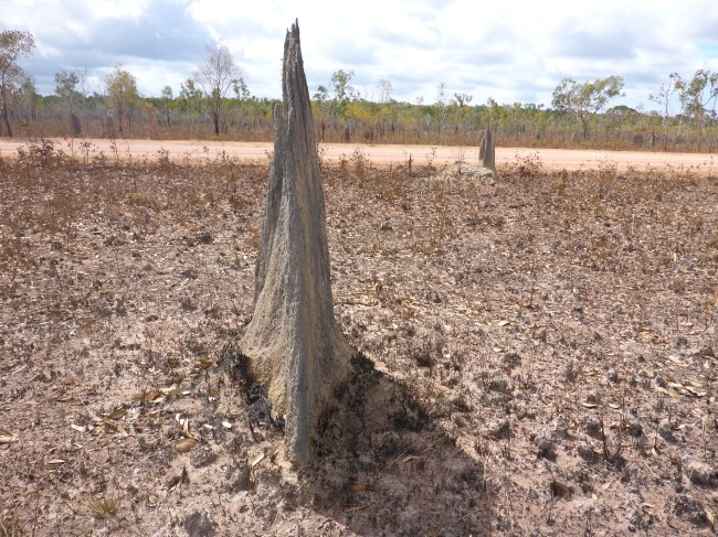Nothing like the more common misshapen lumps that termites normally build.