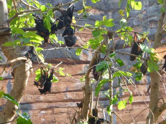 Fruit bats. They never seem to stay still.