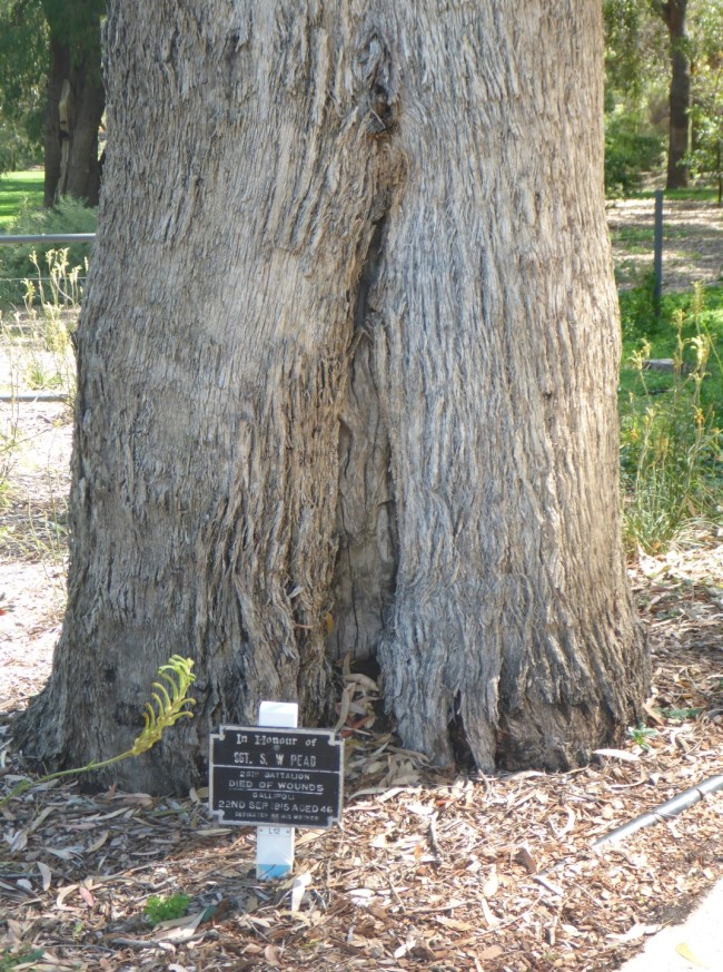 One of the trees, with plaque.