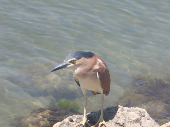 Local bird life.