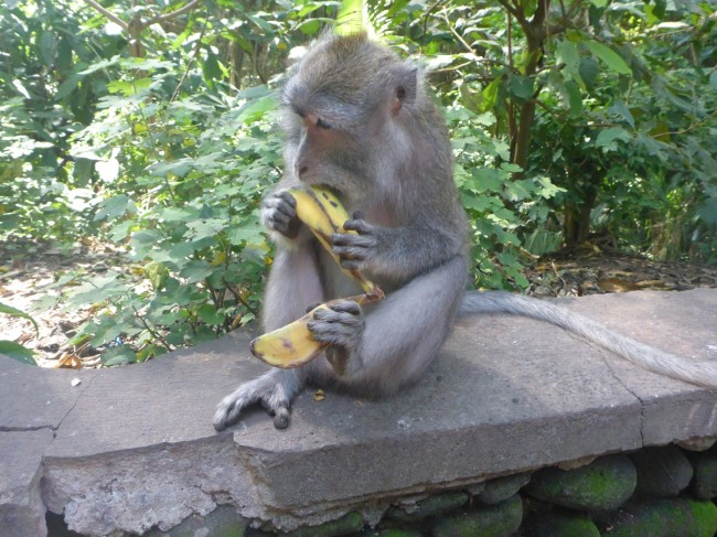 'Another one? It's just as well I like bananas.'
