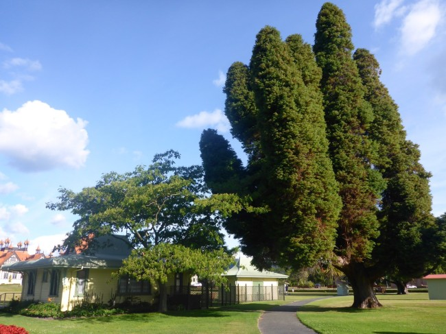 Old park buildings and native rees.