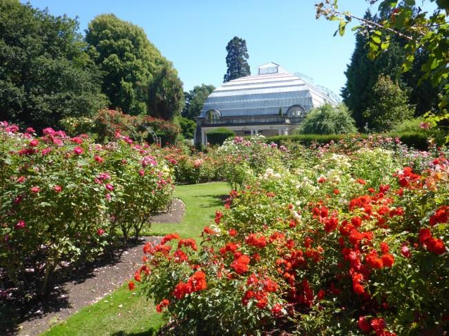 Botanical Gardens, Rose Garden.