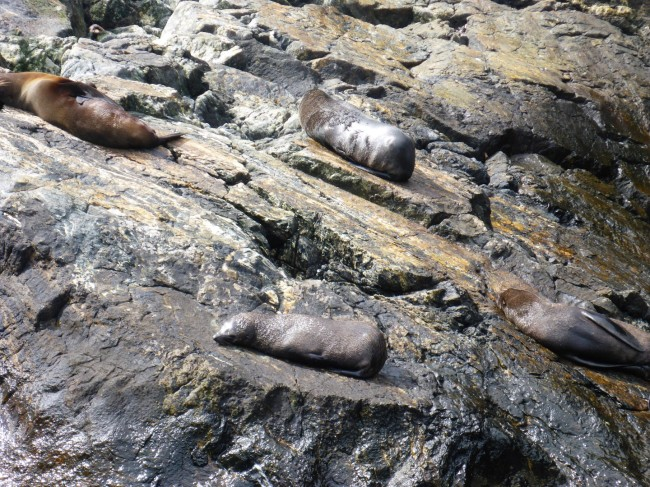 Basking seals.