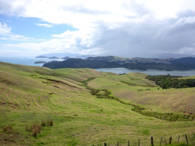Up on the Coromandel.