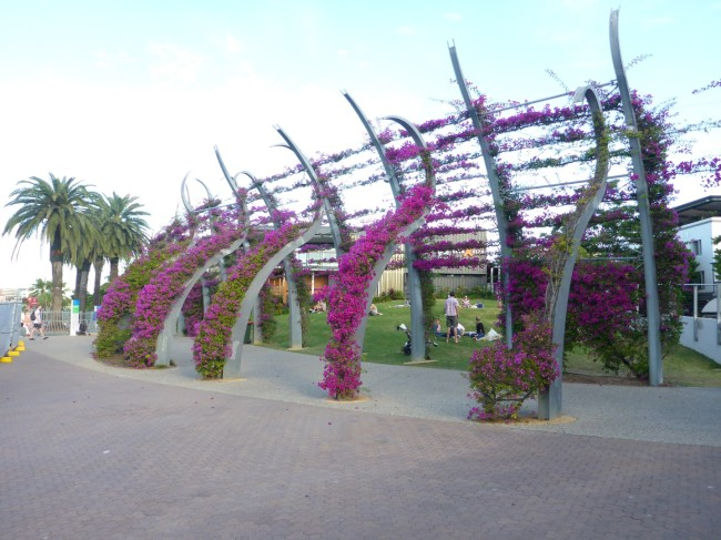 Flower covered walkway, very pleasant to stroll through.