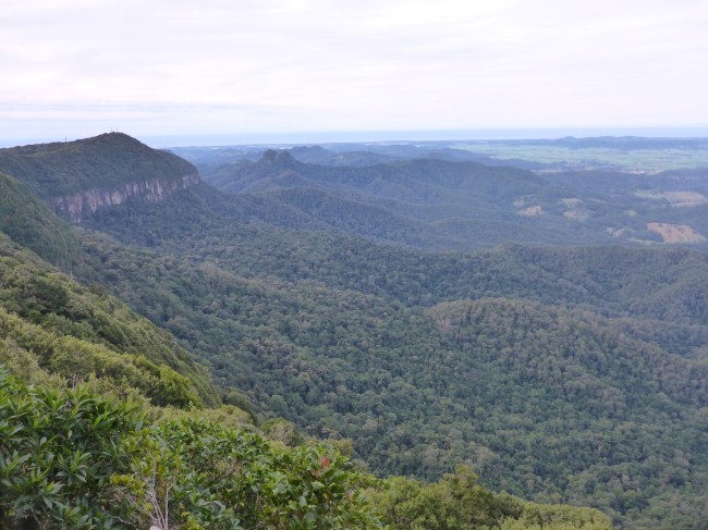 The volcanic ridge, with rainforest below. Springbrook National Park.