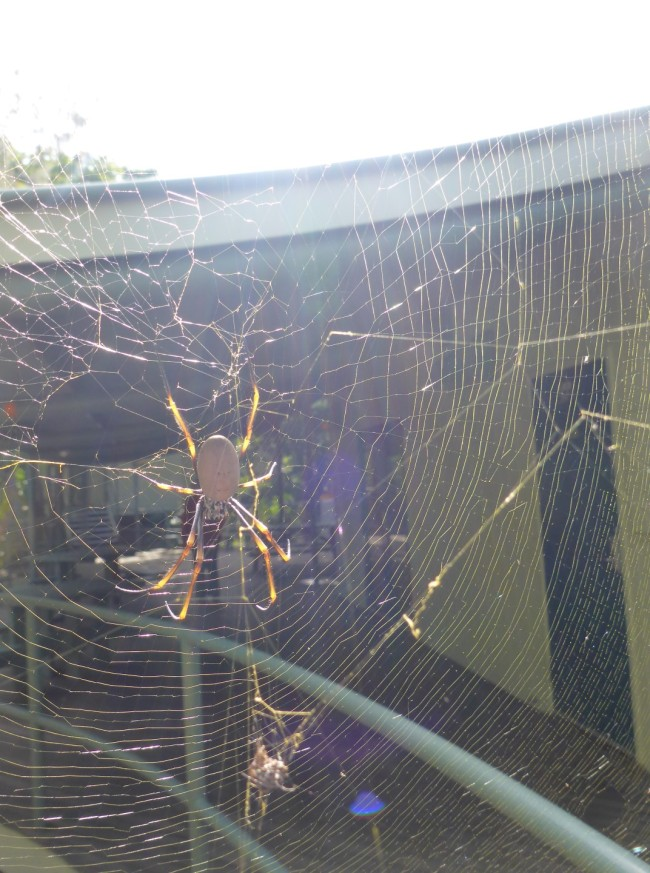 Down at the sea turtle centre. No turtles, but a big spider weaving its web.