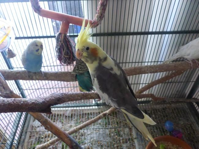 Melissa has her birds.