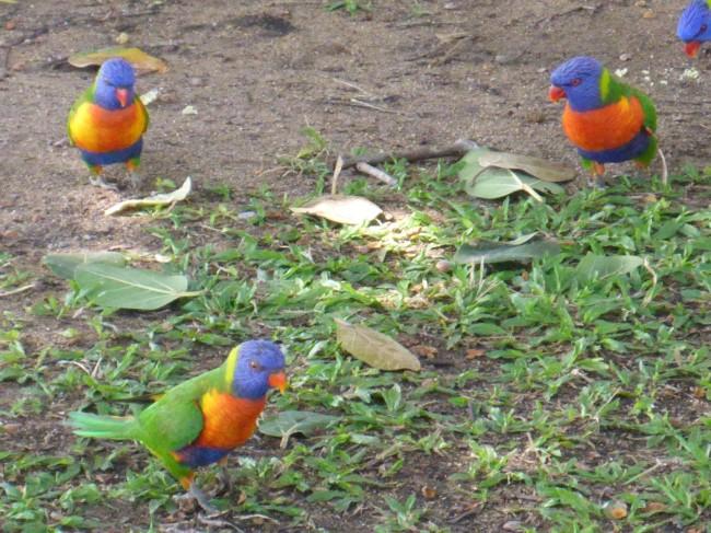 Noisy, squabbling parrots.