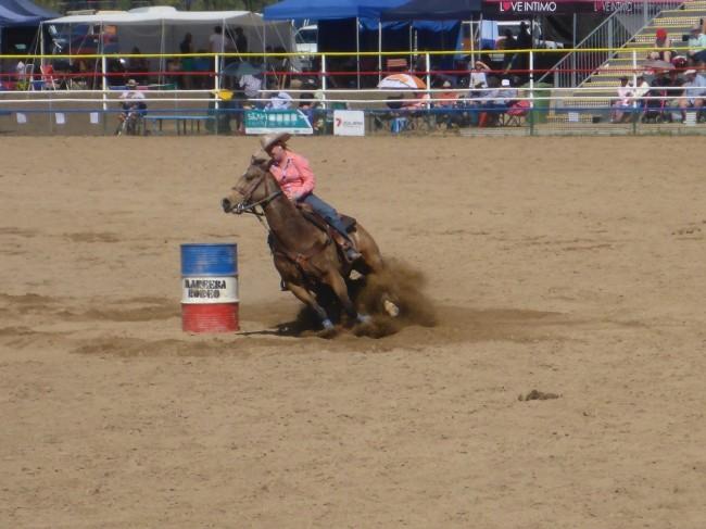 An agile horse.