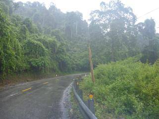 Jungle shrouded roads.